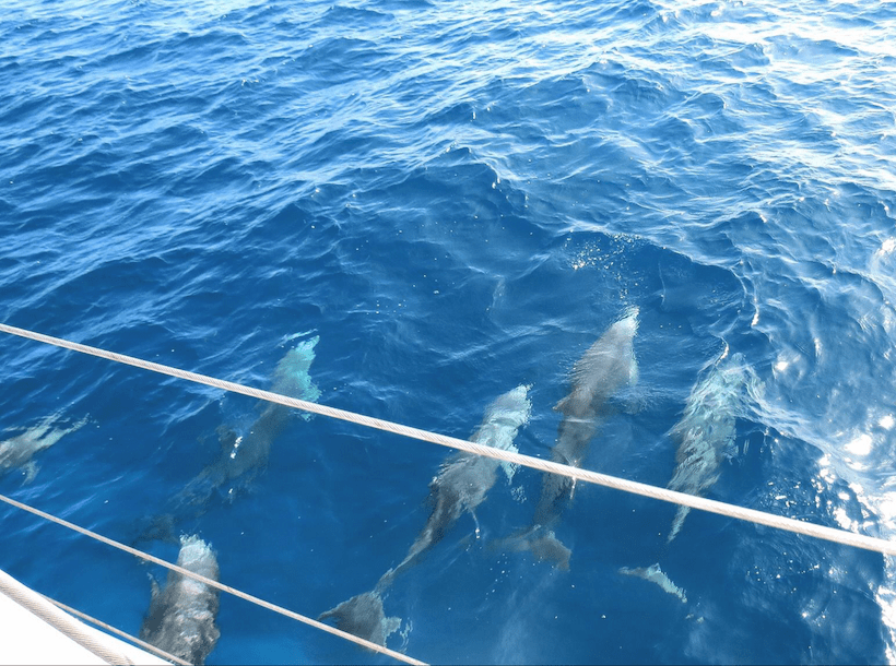 Pod of dolphins swimming beside a yacht